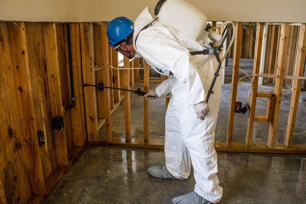 mold-remediation-environmental-services-synergynds